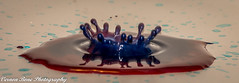 Splashing Around (vernonbone) Tags: 2016 300mmnikon blue d3200 lens milksplashing closeup colors nikon red reddish splash street studio