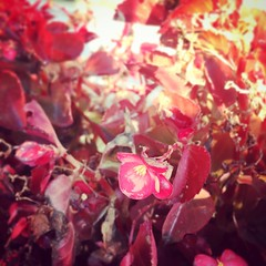 Winter Blossoms (Taymaz Valley) Tags: uk usa canada iran ireland france germany japan india china tehran iranian persian paris berlin ottawa montreal toronto vancouver guelph waterloo london cambridge marchtown taymazvalley love art artist artwork cityscape dublin creativecommons cc creative photography photographer tokyo washington nyc newyork boston miami california chicago florida la sky landscape city street ottawalive ottawaliving photooftheday