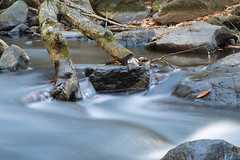 Rocky Stream (William_Doyle) Tags: black river hacklebarney state park water movement leaves rocks nature woods trees november 2016 canon vanguard