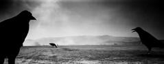 Felix Tian Burning Man 2016 Utopia29 (felixtian.com) Tags: burning man 2016 contaxrx zeiss21mm xpan infraredfilmhie kodaktmx100 ilforddelta400