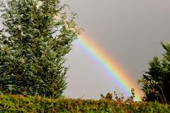 Giboulée (JDAMI) Tags: arcenciel couleurs giboulée orage ciel gris arbre haie amiens somme 80 picardie d600 tamron 2470 nikon