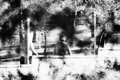 Las sombras - In Explore 22-11-16 (LL Poems) Tags: tejuelo aire libre rbol planta mediterranean textura vida  look   paisaje tierra land noiretblanc blanco negro monocromtico