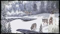 A Dream of Wolves in the Snow (alexandra wardark) Tags: subtlefogvogue winter snow forest wolves secondlife sl fantasy fantasyworld coffeetime wewanttobefree