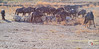 Réserve africaine (stef974run) Tags: réserve sigean lion autruche émeu paon chimpanzé capucin cochon dromadaire éléphant suricate gazelle gnou ours tortue canard girafe léopard perroquet rhinocéros crocodile bommert