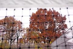 L1000455_p_g (thebiblioholic) Tags: setonpark riverdale bronx tenniscourt fallcolors