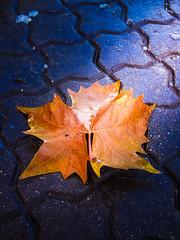 Autumn pics (cosminme) Tags: cold sun rays craiova romania day photography colors leaf autumn
