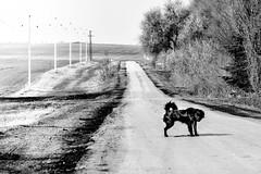 road to nowhere (Zlatko Vickovic) Tags: streetstreetphoto streetphotography streetphotographybw streetbw streetphotobw blackandwhite monochrome zlatkovickovic zlatkovickovicphotography novisad serbia vojvodina srbija