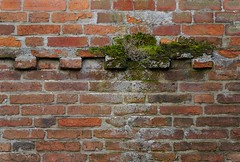 Damp Course (Grooover) Tags: wall bricks moss damp beccles suffolk grooover