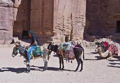 Warten / Waiting (schreibtnix) Tags: reisen travelling naherosten neareast  jordanien  jordan petra tiere animals esel donkey dromedar camel menschen people olympuse5 schreibtnix