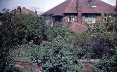 img226 (foundin_a_attic) Tags: april 1973 street houses homes fashion eveyday life england suburbs garden trees wall house blue windows