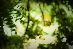 Artwork (rahul_rrk) Tags: bokeh artwork canopy 700d canon pondicherry