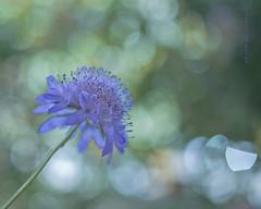 Levedad. (Francisco J. Prez.) Tags: naturaleza nature plantas flor 35mmf24 pentaxart pentaxk5 franciscojprez