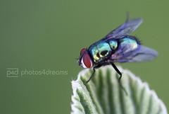 how to catch a fly (photos4dreams) Tags: plants plant macro frankfurt pflanze pflanzen makro palmengarten garten ffm botanischer photos4dreams photos4dreamz p4d catchaflyp4d