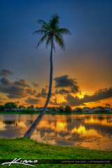 Coconut-Tree-at-Lake-Catherine-during-Sunset