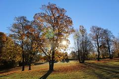 Autumn light (Ingrid Lie) Tags: autumn trees fall field early shadows sunny hst trr ekeberg formiddag skygger