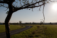 Broken Branch (Franois Hernandez) Tags: road autumn france tree fall silhouette automne countryside nikon village route alsace tamron franois campagne arbre fh hernandez d90 tamron2470 nikond90 drulingen