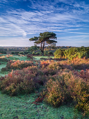 Bratley View - New Forest (Christopher Pope Photography) Tags: sunrise dawn newforest lanscape singletree sonynex5n