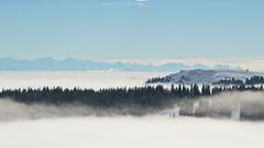 inversion (micagoto) Tags: november alps topv111 fog inversion alpen schwarzwald blackforest feldberg herzogenhorn hochnebel wolkenmeer