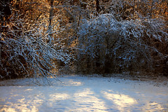 Warm woods - cool snow (wildandwoolyart) Tags: trees snow woods snowybranches