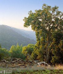 The Fallen and the Living (James L. Snyder) Tags: 2005 california ranch park autumn usa foothills tree fall broken grass vertical rural forest dead living haze oak quercus ruins december afternoon view natural native country logs peaceful atmosphere bluesky glorious valley fallen bayarea trunk vista verdant openspace lush hazy overlook majestic bushes graceful preserve santacruzmountains idyllic remains shrubs tranquil cracked atmospheric hilltop enchanted losaltoshills towering crumbling noble luxuriant tangled stately crumbled beckoning statuesque transient santaclaracounty deadgrass ranchosanantonio santaclaravalley roguevalley openspacepreserve distantmountains treesonhills lifeversusdeath moratrail