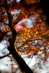 IMG_5204 (Thomo13) Tags: autumn trees red colour fall leaves yellow japan canon temple eos gold kyoto mark ii 5d kiyomizu koyo momoji