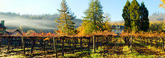 Fall in Napa (All About Light!) Tags: morninglight fallcolors napavalley winecountry