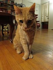 IMG_1508 (Dan Correia) Tags: cat michael notmycat 15fav topv111 topv333 topv555 topv777 topv999 topv1111