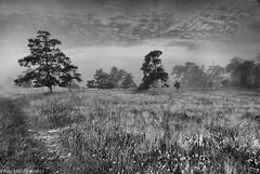 Fårö_view_bw (@photobjorn) Tags: trees summer bw mist monochrome fog landscape sweden wide wideangle d200 fårö tokina12244 apsc