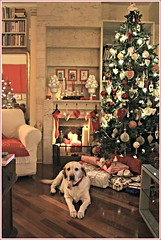 aspettando Natale (Anto/logia) Tags: cane labrador natale 2013 eccolafotoconlacana