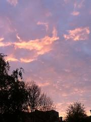 IMG2619 (Myumeful) Tags: morning pink sky cloud tree clouds purple