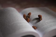 (heycarolinebye) Tags: light pine 50mm book narnia