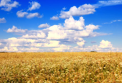 Bright Summer (gráce) Tags: flowers summer sky nature field clouds landscape