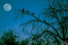 """Blue Hour (zai Qtr) Tags: moon museum al kitlens bin fullmoon zai bluehour 1855mm thani sheikh aamir gcc qatar faisal qassim simplysuperb """"nikonflickraward"""" sheikhfaisalbinqassimalthanimuseum nikond5100 simplysuperbhalloffame january2014 potd:country=menaar"""