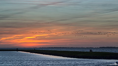 Free as a bird (BraCom (Bram)) Tags: holland birds clouds sunrise canon bench widescreen nederland thenetherlands vogels wolken mooring 169 goereeoverflakkee bankje meerpaal grevelingen southholland zonsopkomst canonef24105mm herkingen bracom canoneos5dmkiii vision:sunset=0873 vision:clouds=0926 vision:outdoor=0988 vision:sky=0985 vision:ocean=0614 vision:car=0888