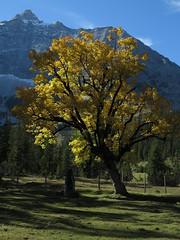 Kleiner Ahornboden Almboden Karwendel Gebirge Alps Alpen Tirol (hn.