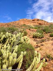 San Quintin Baja-46 (bajabrains) Tags: sunset cactus beach sports fauna volcano restaurant hotel san tour sierra pedro motor whales baja guide 1000 quintin martir {vision}:{outdoor}=0989 {vision}:{mountain}=0764 {vision}:{sky}=0577 {vision}:{clouds}=0619 {vision}:{plant}=0635