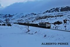 Una parte del Trasona-Sagunto.....(251.017) (alberto vtr) Tags: en snow train de tren puerto la nikon nieve pajares acero ferrocarril renfe d60 sagunto 251 ffcc mercancias bobinas trasona bobinero 251017 maconsa