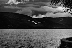 Take me away [Explored February 26th 2014] (ChrisBrn) Tags: blackandwhite bw lake bird clouds seagull hills