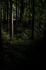 Light in the Woods