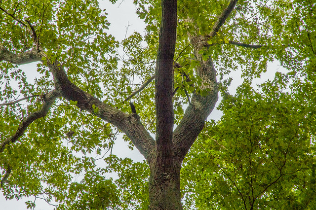 Donaldson's Woods Nature Preserve - Spring Mill State Park - June 8, 2014