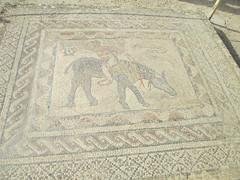 Roman Mosaic of Volubilis (Meknès-Tafilalet Region, Morocco) (courthouselover) Tags: unesco morocco maroc volubilis unescoworldheritagesites المغرب almaghrib وليلي meknèstafilalet archaeologicalsiteofvolubilis meknèstafilaletregion régiondumeknèstafilalet