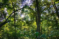 DSC05425-27_HDR (Capt Kodak) Tags: autumn chattahoocheerivernationalrecreationarea fall hdrefexpro2 madefrom3images medlockbridgepark nationalparkservice nikcollectionbygoogle niksoftware photomerge
