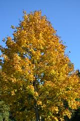 DSC_0029 (florian.glechner) Tags: herbst bume pichlingersee bltter autumn oktober natur farben colors light licht herbstlandschaft farbe herbstfarben trees landscape landschaft see lake himmel heaven wiese grass