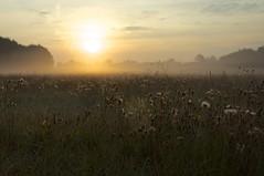 morgendliche Impressionen (fotio14) Tags: wiese nebel sonnenaufgang spinnennetz