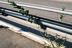 On the road (sirio174 (anche su Lomography)) Tags: road strada pianta vegetazione asfalto como