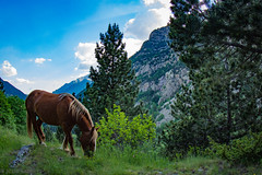 Pyrenees Mountains (jcl8888) Tags: horse wild nikon d7200 tokina 1017mm travel backpacking hiking spain boi vacation mountains