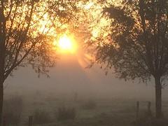 Vandaag zonnig begin (Omroep Zeeland) Tags: zonnestralen mist weide gebied