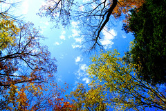 Perfect (LaLa83) Tags: sky trees nature clouds blue autumn leaves outdoors exploreohio hockinghills beautifulohio hockingcounty ohio october 2016 ashcave sony a230