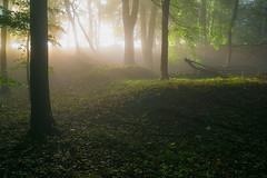 Forest Mood (jactoll) Tags: broadway worcestershire cotswolds mist misty light woods woodland trees landscape sony zeiss jactoll