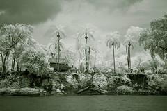 rio_wawashang_nicaragua (charles.baldy) Tags: riowawashang raas nicaragua pobreza armut miskito reservanatural naturschutz infrarot infrared infrarojo indigena